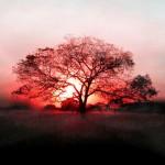 Рајски зајдисонца