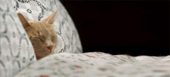 Креативна реклама на Икеа: 100 слатки мачиња во потрага по место за одмор
