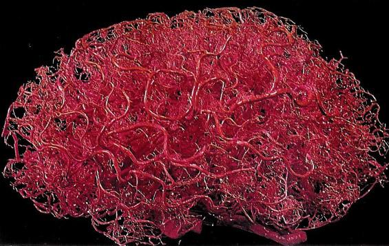 Факти за мозокот што ќе ве натераат да се замислите