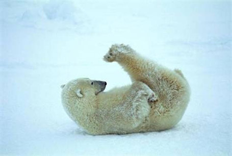 И животните вежбаат јога