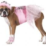 Облечете го вашето куче со стил