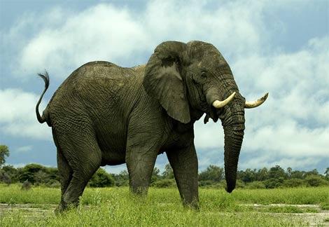 Неколку чудни и интересни факти за животните
