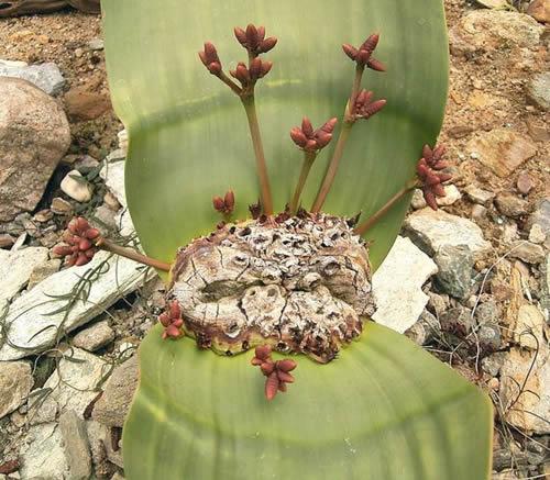 Топ 10 најчудни растенија во светот