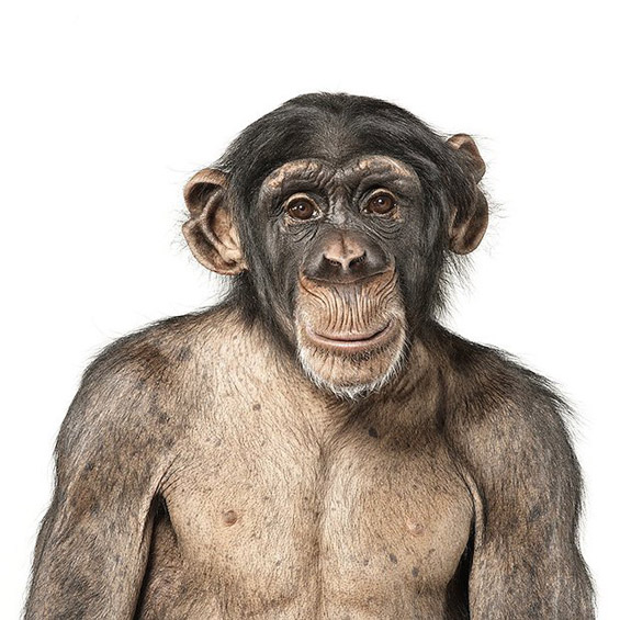 Креативни портрети на животни
