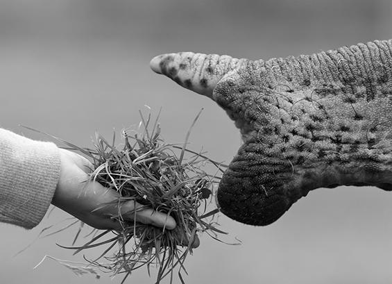 (2) Неверојатни црно-бели фотографии