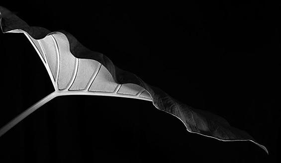 (11) Неверојатни црно-бели фотографии
