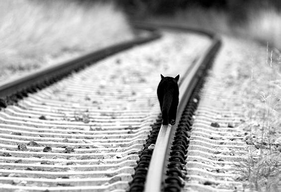 (13) Неверојатни црно-бели фотографии