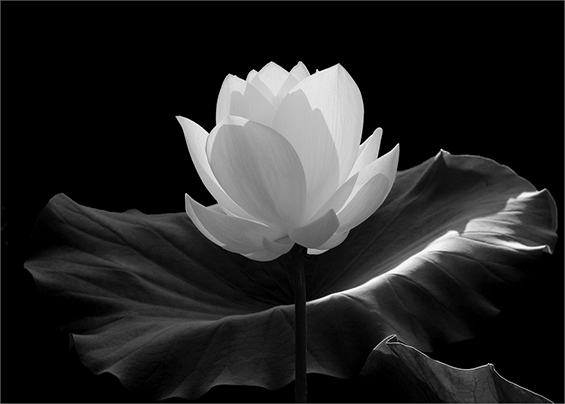 (7) Неверојатни црно-бели фотографии