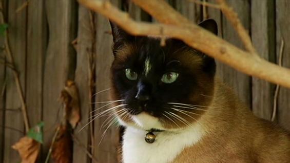 Мачка клептоман