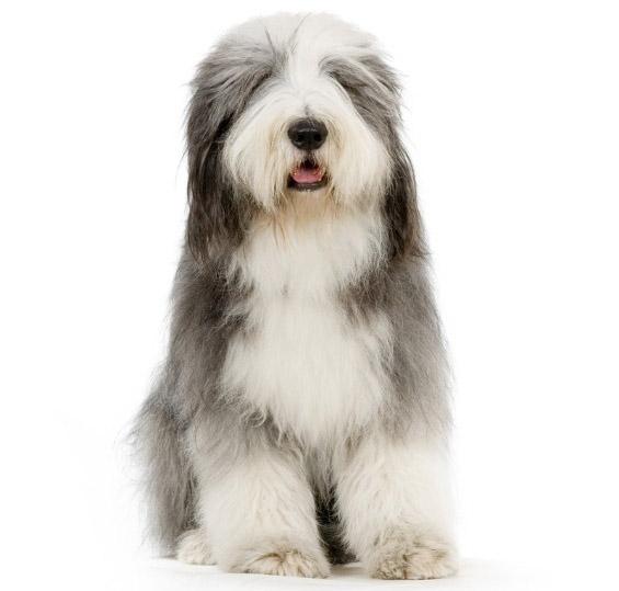 Најбушавите кучиња во светот