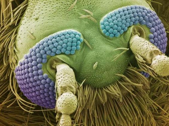 микрокосмос: слики направени со електронски микроскоп