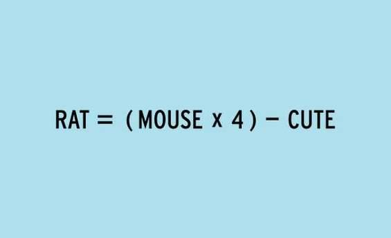 Животни равенки