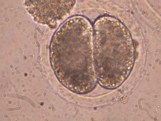 Моќта на матичните клетки