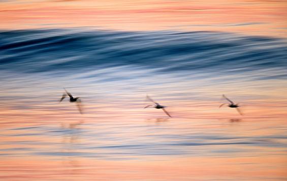 Магијата на брановите