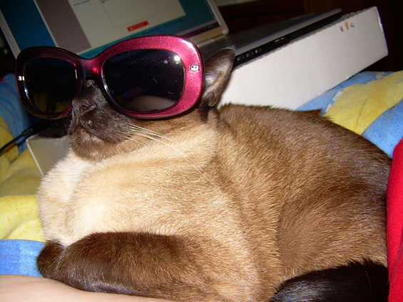 Слатки мачиња со очила