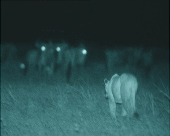 Животинскиот свет на Африка во ноќта