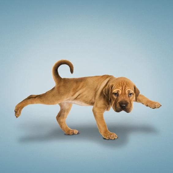 Преслатки кучиња вежбаат јога
