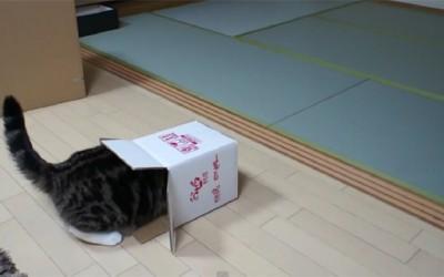 Мачка во кутија