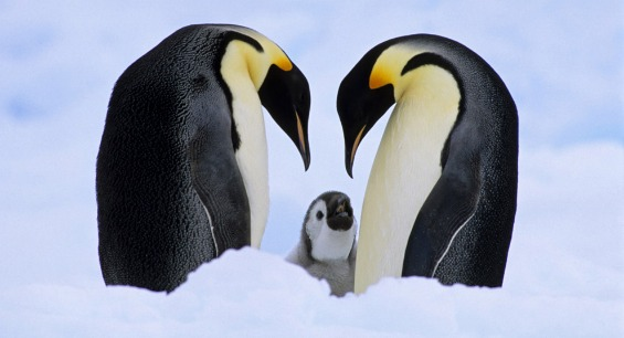 Penguins, Polar Bears, Glaciers, Arctic Ice All Thriving 1 top 10 najubavi ptici vo svetot