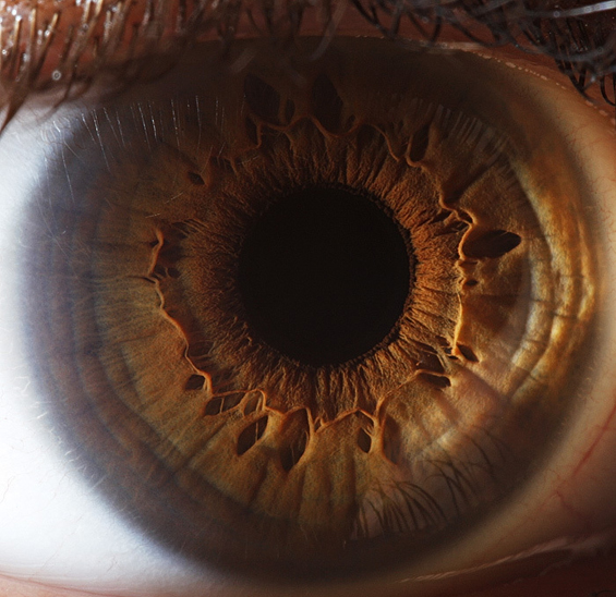 Уметничката страна на човечкото око