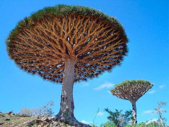Волшебни и чудни дрвја