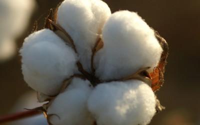 3 трикови за чистење со памук