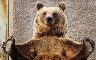 Запознајте ја Мими: мечката што сака јога