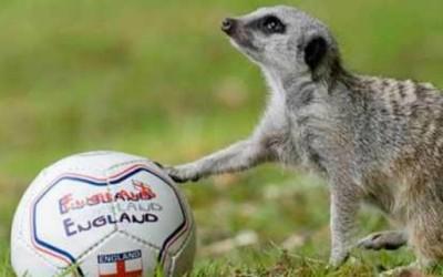 Животните и фудбалот