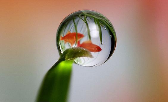 Светот погледнат низ капка вода