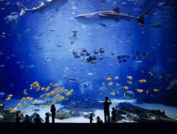 Најголемиот аквариум во светот