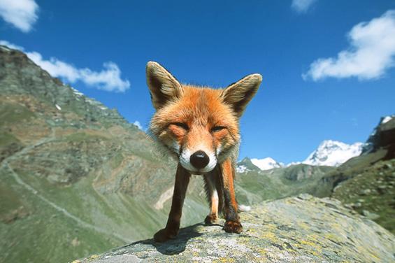 Кога фотограф ќе се спријатели со диви животни...