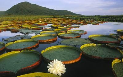 10 најубави мочуришта на Земјата