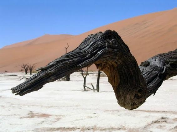 Гробница на дрвја стари 900 години