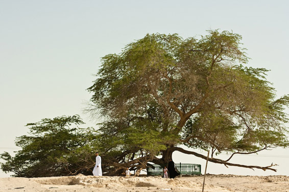 Дрвото на животот во Бахреин