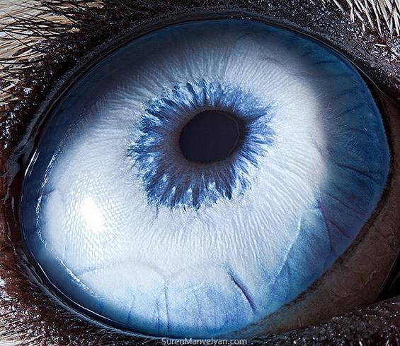 Уметноста скриена во животинските очи