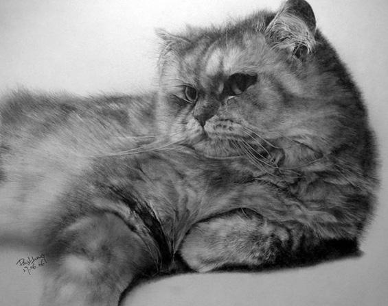 Мили мачиња нацртани со молив