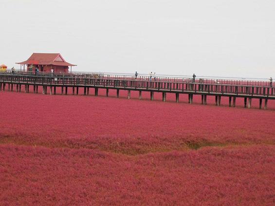 Црвената плажа во Кина