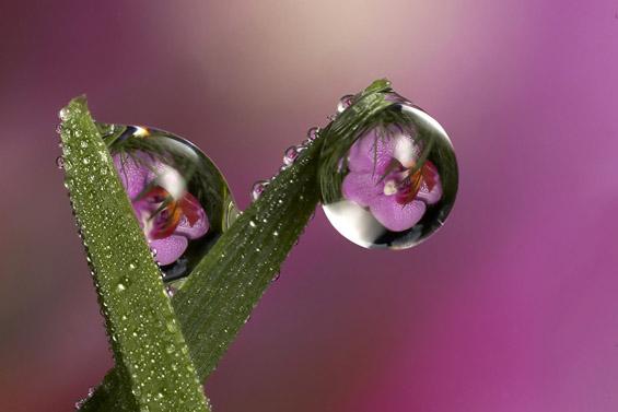 Магична рефлексија во ситни капки вода