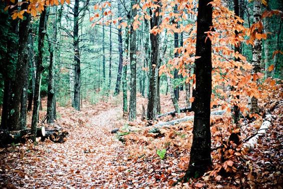 Колоритно спокојство во магловита шума