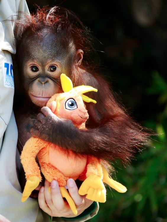 23 неверојатни фотографии со животни сликани во 2011 година