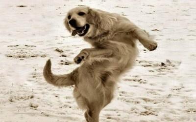 Кучиња кои танцуваат на латино звуци