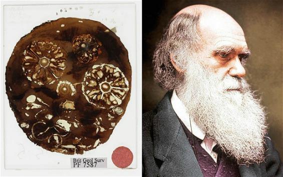 """Пронајдени """"изгубените"""" фосили на Чарлс Дарвин"""
