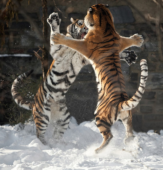 Неверојатни битки во природата