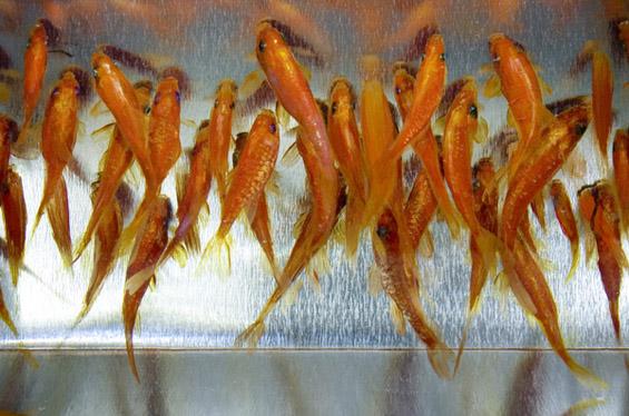 Фантастични 3Д рипки насликани во смола