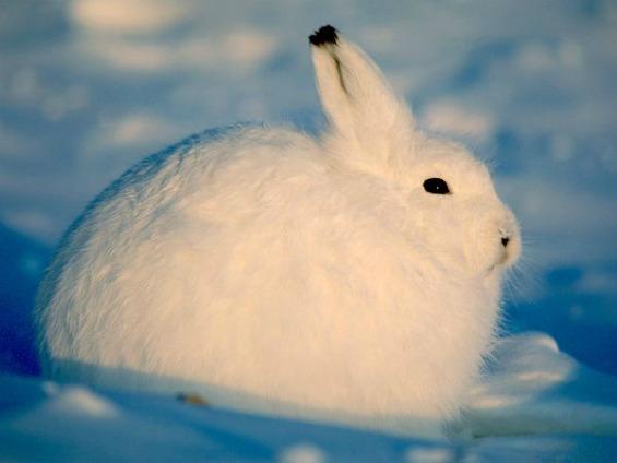 Поларните животни и нивната зимска идила