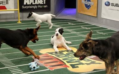 Запознајте ги новите неодоливи натпреварувачи во купот на кутрињата