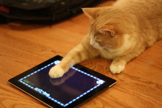 Симпатични животни си играат со мобилни уреди