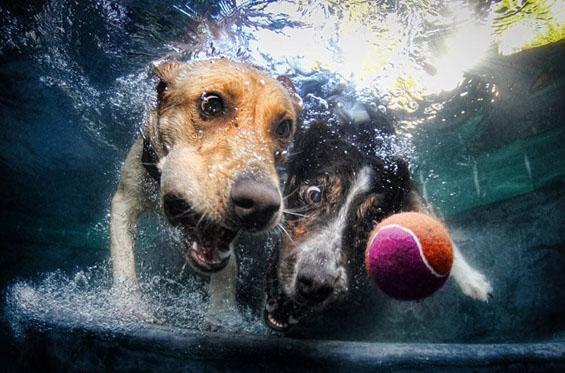 Фотографии од кучиња во подводна акција