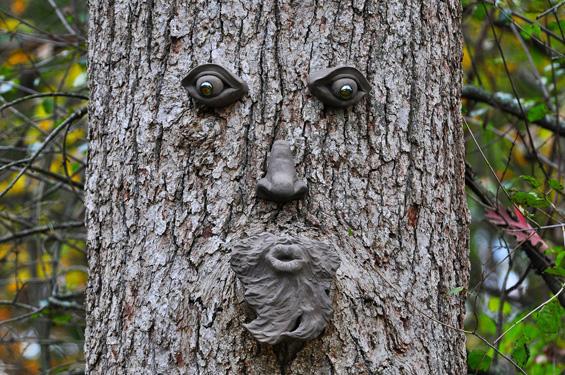 Интересни дрвја со несекојдневен облик