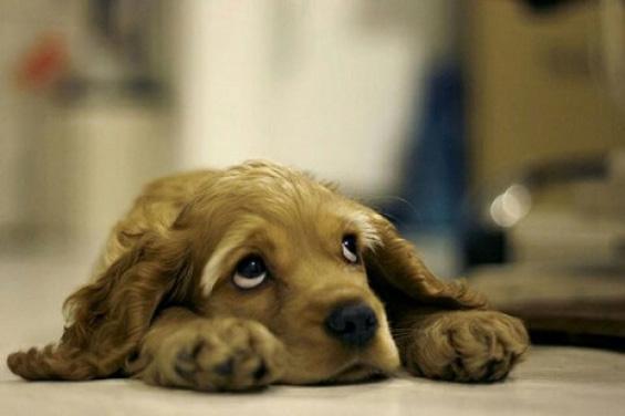 Слатки мили животинчиња